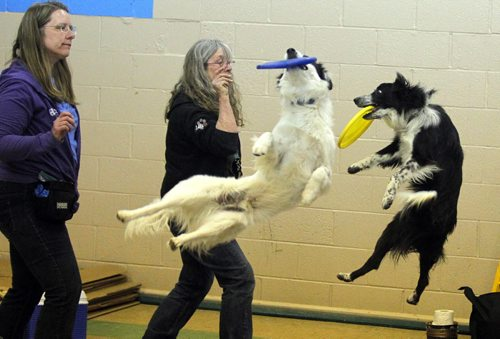 BORIS MINKEVICH / WINNIPEG FREE PRESS LOCAL STDUP - Left to right -Sally Hull, Leigh Paige, Zen and Riddick put on a show. There was a dog show put on by Hull's Haven Border Collie Rescue.  From press release:  Winnipeg Scouts Pamper Rescue Dogs, Creating Food Dispensing Games, Handmade Beds and Treats During Good Turn Week, April 22 – May 1. Scouts Canada is challenging all Canadians to join them in performing a Good Turn as part of a national movement to spread goodwill during Good Turn Week, April 22 – May 1, 2016. A Good Turn doesn't have to be a grand gesture; it can be as simple as helping a neighbour unload their groceries or helping someone who is short of change at the store checkout. Scouts from across Winnipeg are collecting donations of towels, blankets, toys, dog food and other pet supplies for Hull's Haven Border Collie Rescue. The Scouts are also building fun food dispersing games, making handmade dog beds and creating homemade treats for the rescue dogs awaiting new homes.  Photo taken at Transcona Scout Hall. April 28, 2016