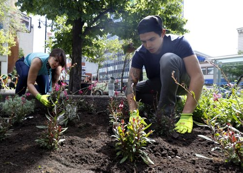 WAYNE GLOWACKI / WINNIPEG FREE PRESS       Sean McVey and Leanna Gurniak both with APTN plant Indian Feather plants, they were among the volunteers that helped plant a variety of indigenous plants in the second annual indigenous gardens at Air Canada Park Tuesday. The project with help from the Downtown Winnipeg BIZ, APTN, and the City of Winnipeg showcases indigenous plants that include Prairie Sage, Blue Lobella, Sweetgrass, Cedar and Gaillardia to  celebrate the culture and traditions of our indigenous community and to enhance the downtown.  see release.  June 7  2016