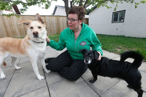JOHN WOODS / WINNIPEG FREE PRESS Colleen Holloway of Manitoba Mutts and her rescue dogs Penny (L) and Sadie are photographed Tuesday, May 16, 2017. Little Grand Rapids has contacted Manitoba Mutts to assist in spaying/neutering dogs after Donnelly Eaglestick was killed over the weekend by a large group of stray dogs.