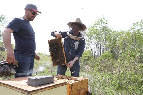 RUTH BONNEVILLE /  WINNIPEG FREE PRESS   Husband and wife beekeeper team Lindsay and Christopher Kirouac tend to their hives in Assiniboine Park.   Subject: Lindsay and Chris Kirouac from Beeproject Apiaries have been operating an urban beehive in Assiniboine Park. They have played a huge role in helping the Assiniboine Park Conservancy spread the conservation message about pollinators.  See Jen's story.    May 19, 2017