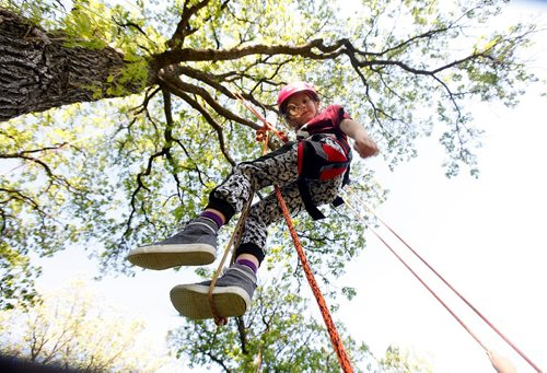 """PHIL HOSSACK / WINNIPEG FREE PRESS  -  7 yr old Tilia Carrier looks down as she ascends to the canopy of a large Oak tree in Crescent Park Thursday afternoon. Chris Barkman aka """"The Barkman"""" set up a practice tree climbing run for some friends as he prepped for this weekend's Arbor Day event where He'll be hosting a climb in a treein St Vital Park Saturday. See release. . Jun 1, 2017 Chris can be reached at 2047813199 later this evening fro more info."""