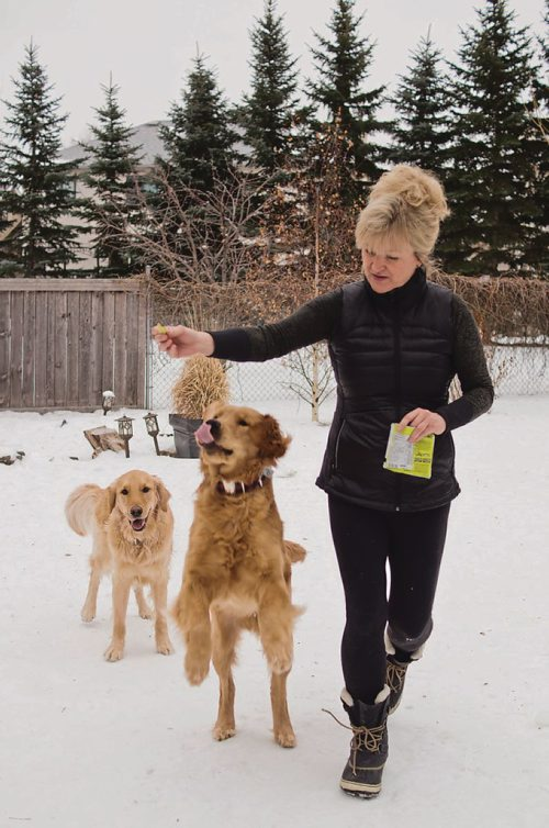 Canstar Community News Jan. 31, 2018 - Sandra Negrey, with her two golden retrievers Mac and Sully, is organizing a fundraising and awareness campaign for the Winnipeg Humane Society with the goal of bringing in $10,000. (DANIELLE DA SILVA/CANSTAR/SOUWESTER)