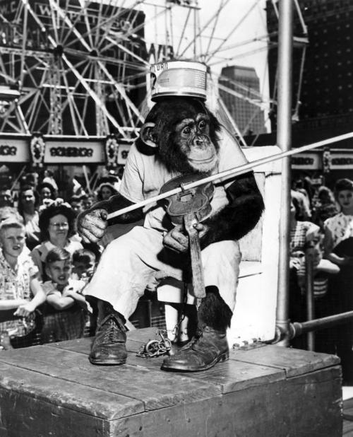 Red River Ex 1963 Noodles the chimp plays violin and races cars on the midway of the Royal American Shows.  Winnipeg Free Press