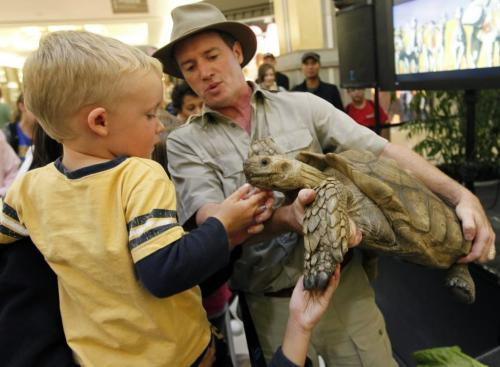 "BORIS.MINKEVICH@FREEPRESS.MB.CA  100909 BORIS MINKEVICH / WINNIPEG FREE PRESS Safari Jeff (Jeff McKay) puts on a traveleing reptile show called ""Living Wild"" at Kildonan Place Shopping Centre. The show runs until Sept 12th. Here three year old Aiden Lavigne from Pine Falls, MB tickles the chin of Father Time, an African spurred tortiose."